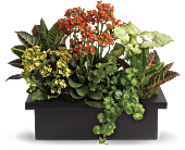 Stylish Plant Assortment, picture