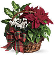 Holiday Homecoming Basket Plants