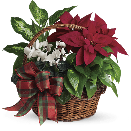 poinsettia facts with diy crafts planting guide teleflora. Black Bedroom Furniture Sets. Home Design Ideas