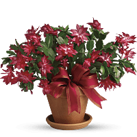 list of non toxic pet friendly plants flowers teleflora. Black Bedroom Furniture Sets. Home Design Ideas