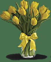 Sunny Yellow Tulips Flowers