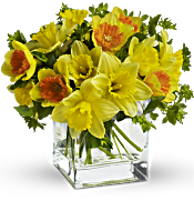 Teleflora's Daffodil Dreams Flowers