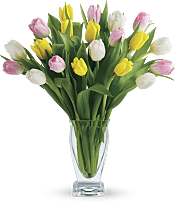 Tulip Treasure PM Flowers