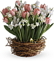 Tulip Song Flowers
