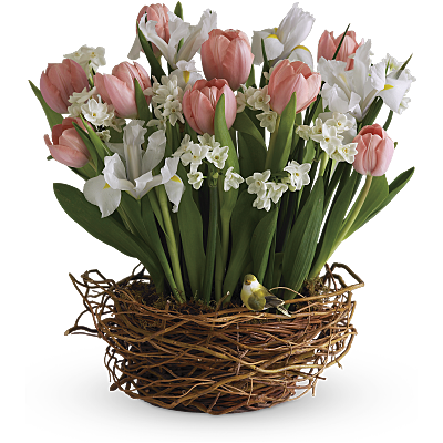 Discover The Meaning Of Birth Month Flowers Teleflora