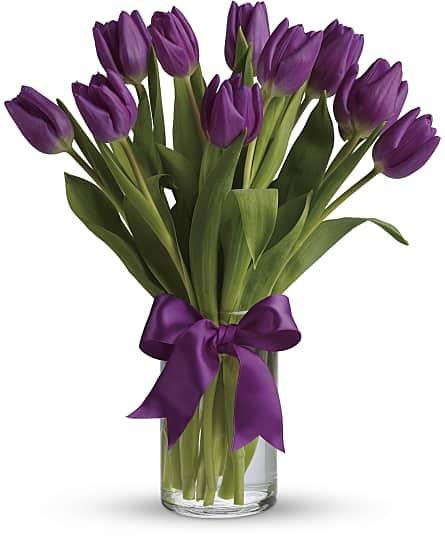Passionate Purple Tulips Flowers