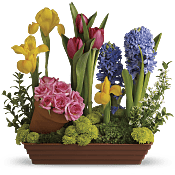 Spring Favorites Flowers
