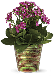 Simply Happy Kalanchoe Plant by Teleflora Plants