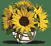 Sunny Sun Flowers