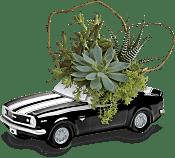 Chevy Camaro Plant Garden Plants