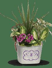 Butterfly Hideaway Plant Garden Plants