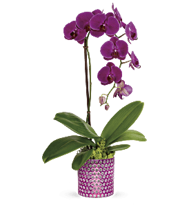 Teleflora's Dazzling Orchid, picture