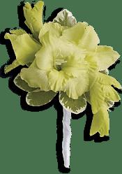 Grand Gladiolus Boutonniere Flowers