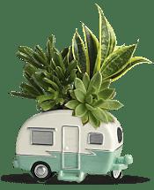 Cool Camper Succulent Garden Plants