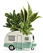 Teleflora's Cool Camper Succulent Garden Plants