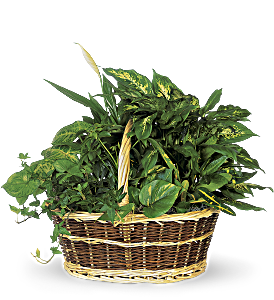 Large Basket Garden, picture