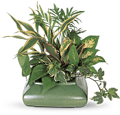 Small Garden Dish Plants