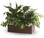 Quiet Expressions Plants