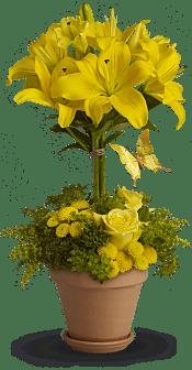 Yellow Fellow Flowers