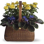 Garden To Go Basket Plants