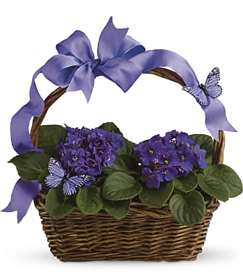 Violets And Butterflies Plants