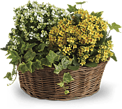 Basket of Joy Plants
