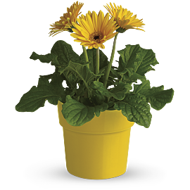 Air Purifying Plants For The Home And Office Teleflora