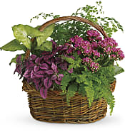 Secret Garden Basket Plants