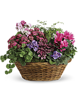 Simply Chic Mixed Plant Basket, picture