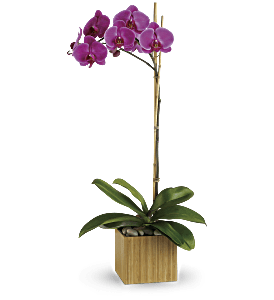 Teleflora's Imperial Purple Orchid, picture