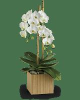 Orchidées opulentes de Teleflora