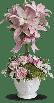Blushing Lilies Plants