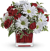 Red And White Delight  Flowers