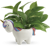 Peaceful Unicorn Pothos Plant Flowers