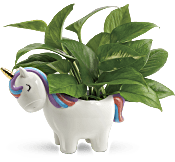 Teleflora's Peaceful Unicorn Pothos Plant Flowers