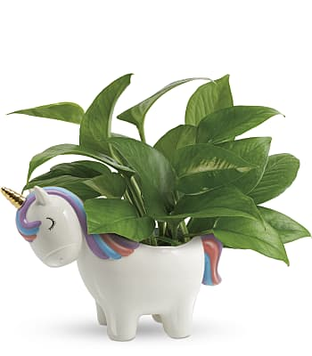 Peaceful Unicorn Pothos Plant Flowers