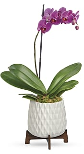 Architectural Orchid Plant Flowers