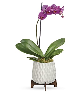 Teleflora's Architectural Orchid Plant Flowers