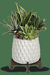 Teleflora's Modern Mood Succulent Garden Flowers