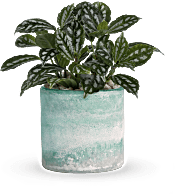 Teleflora's Seaside Mist  Plants