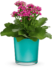 Shimmering Aqua  Plants