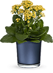 Teleflora's Golden Morning  Plants