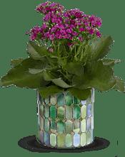 Memorable Mosaic  Plants