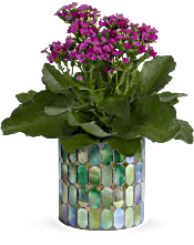 Teleflora's Memorable Mosaic  Plants