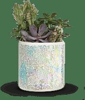 Iridescent Oasis Garden Plants