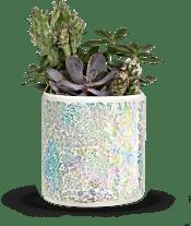Teleflora's Iridescent Oasis Garden Plants