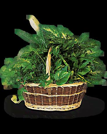 Emerald Garden Basket Teleflora