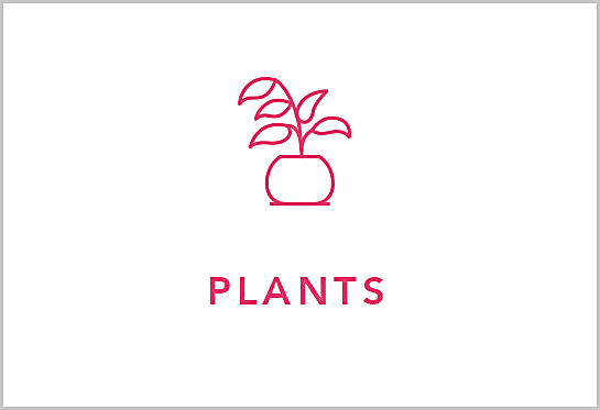Magasiner des plantes