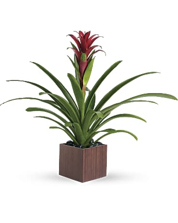 Image result for Bromeliad