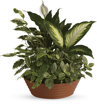 Serene Retreat potted plants